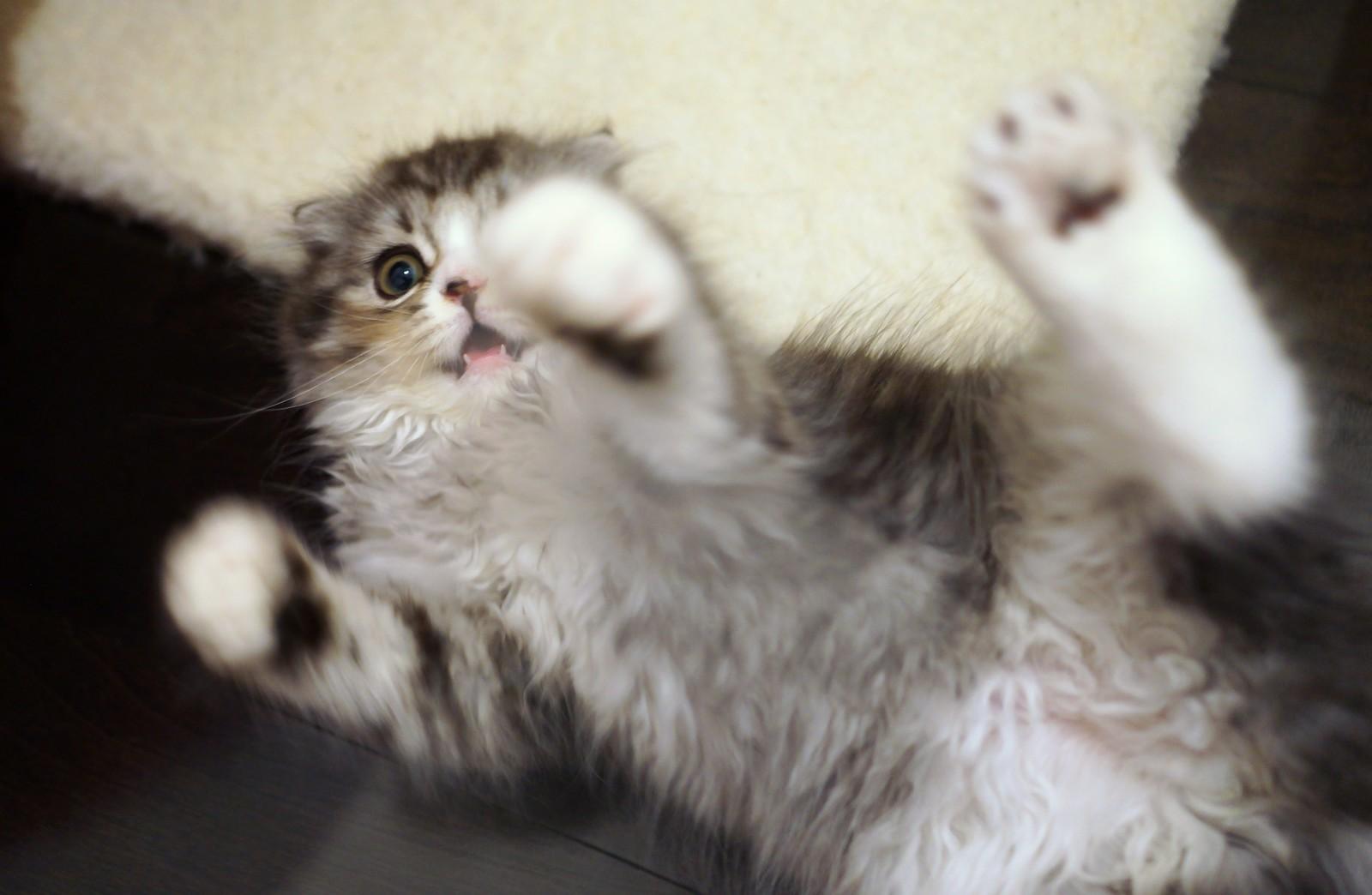 猫をかぶる