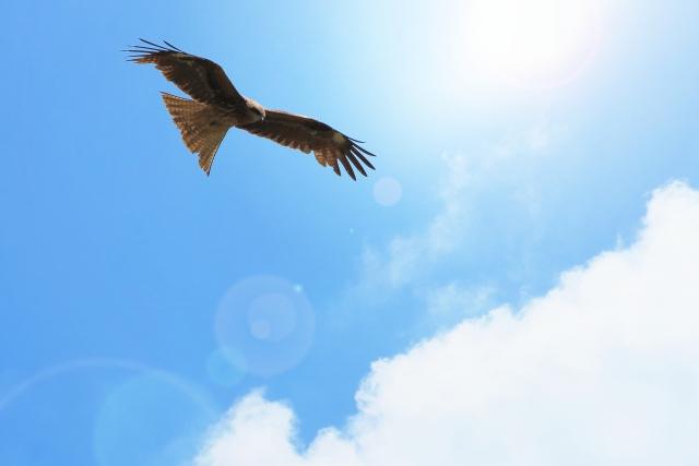 能 ある 鷹 は 爪 を 隠す 類語