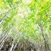 木を隠すなら森の中の意味!例文を使って分かりやすく使い方を紹介!